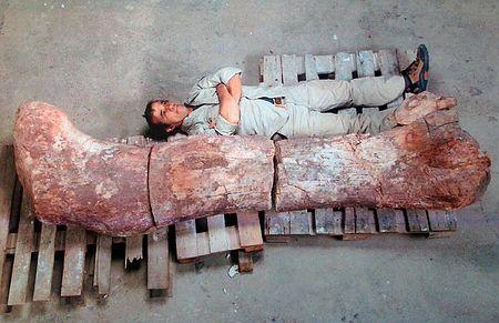 チタノサウルス
